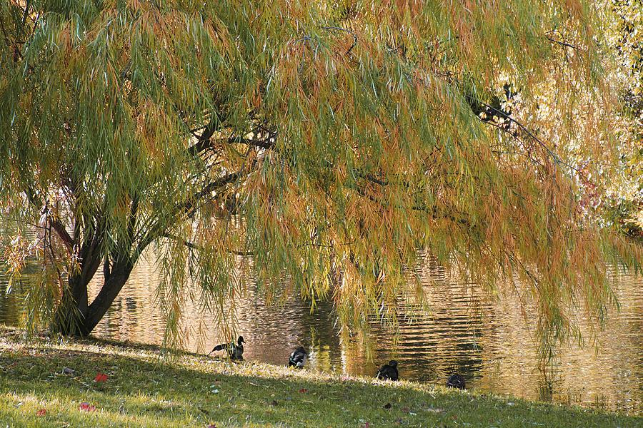 Gold Autumn Photograph