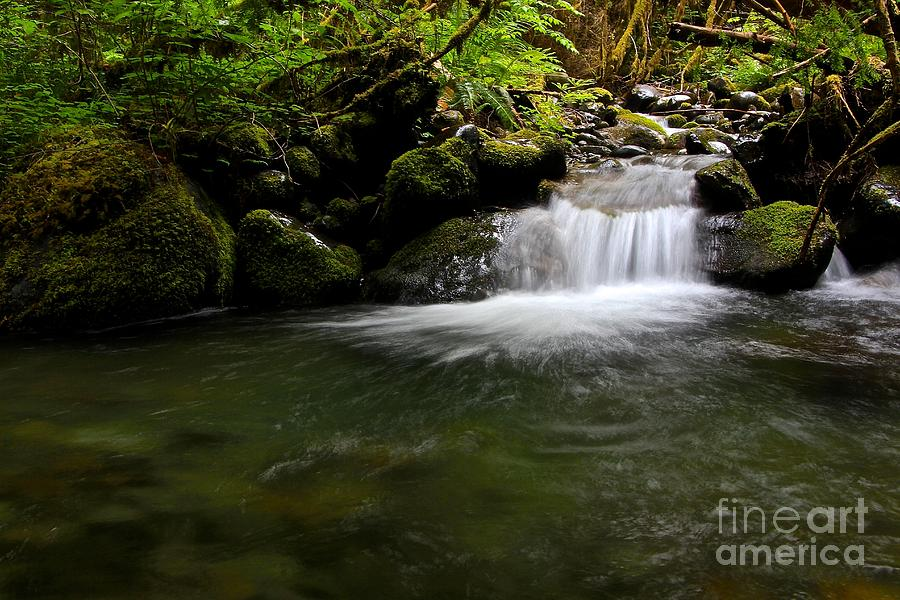 Gold Creek Photograph - Gold Creek  by Tim Rice