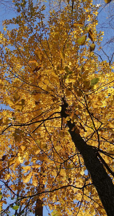 Fall Photograph - Gold by Doug Hubbard