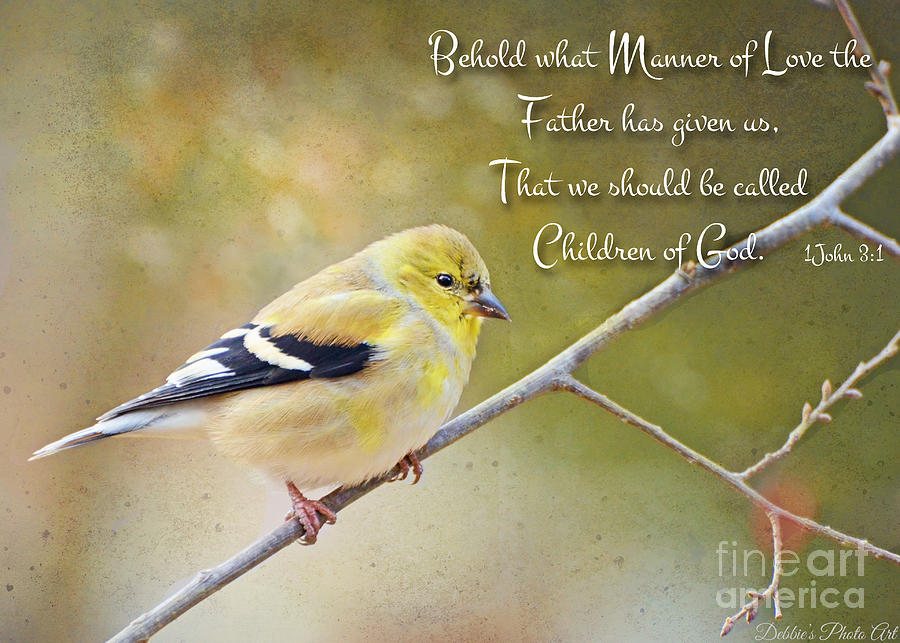 Finch Photograph - Gold Finch On Twig With Verse by Debbie Portwood