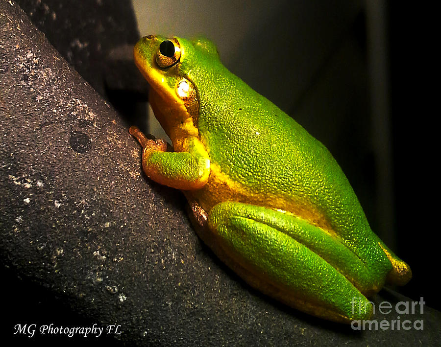 Frog Photograph - Gold Flake Frog by Marty Gayler