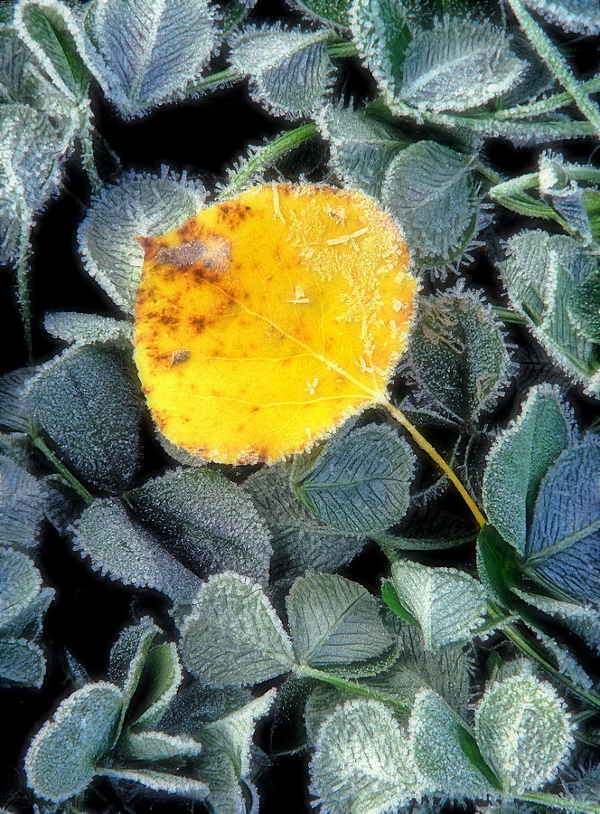 First Frost Photograph - Gold On Green by Bill Morgenstern