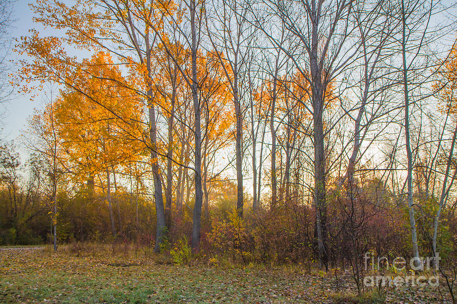 Autumn Photograph - Golden Autumn by Jivko Nakev