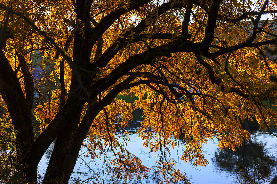 Trees Photograph - Golden Autumn Leaves by Garry Gay