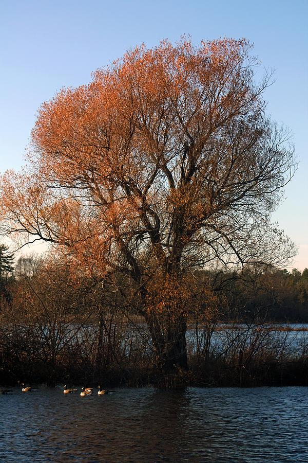 Autumn Photograph - Golden Autumn by Rhonda Humphreys