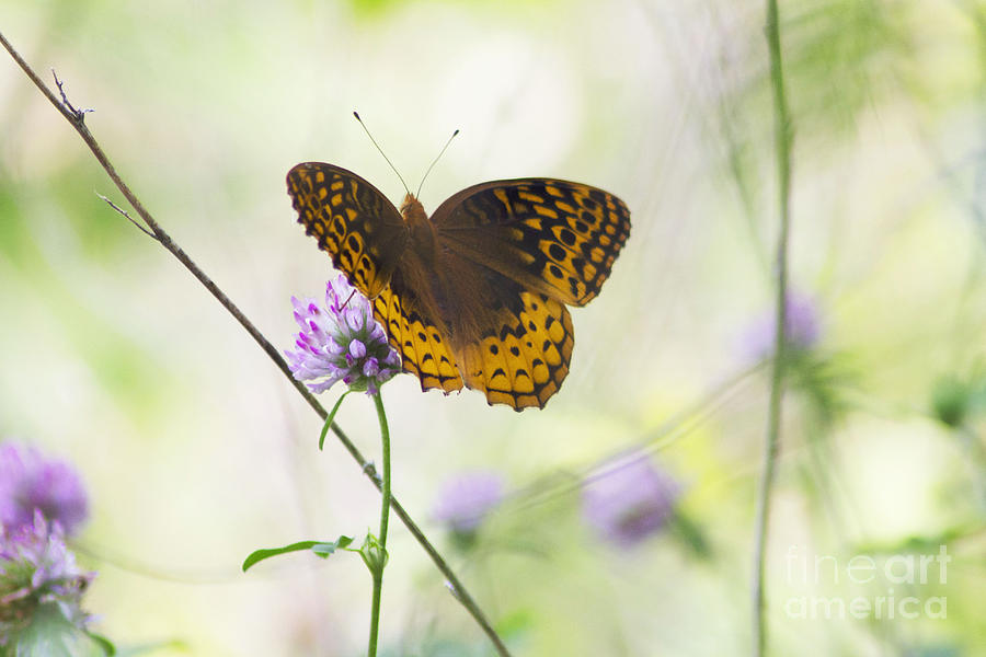 Golden Beauty by Cynthia Mask