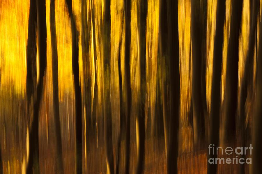 Abstract Photograph - Golden Blur by Anne Gilbert