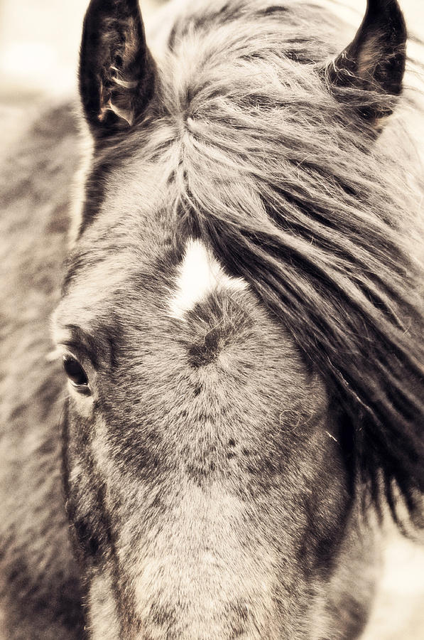 Horse Photograph - Golden Boy by Emily Stauring