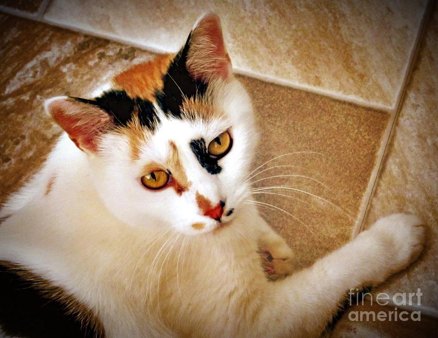 Calico Cat Photograph - Golden Calico by Phyllis Kaltenbach
