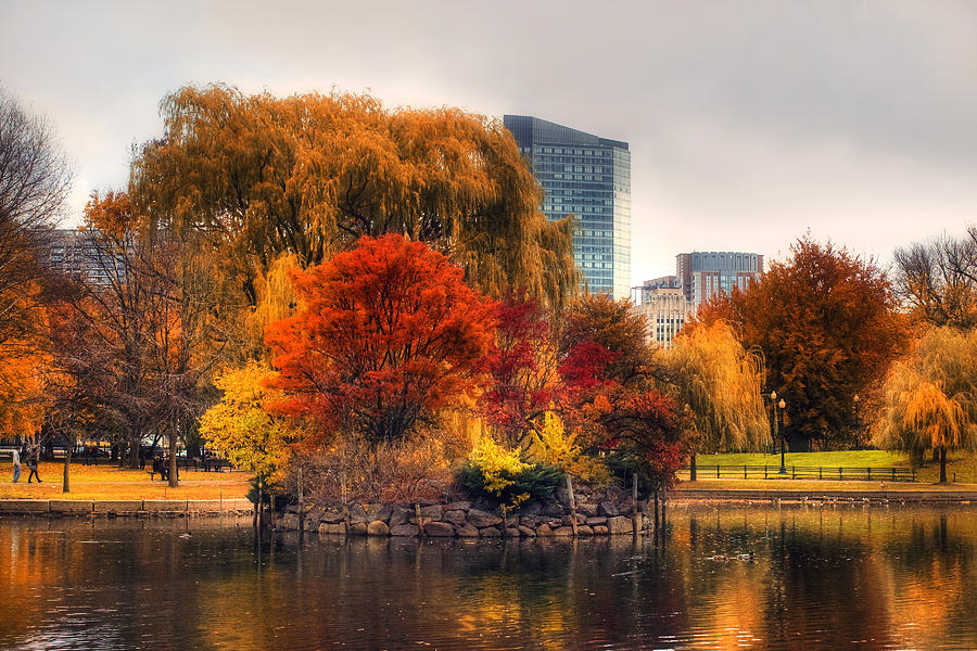 Boston Photograph - Golden Common by Joann Vitali