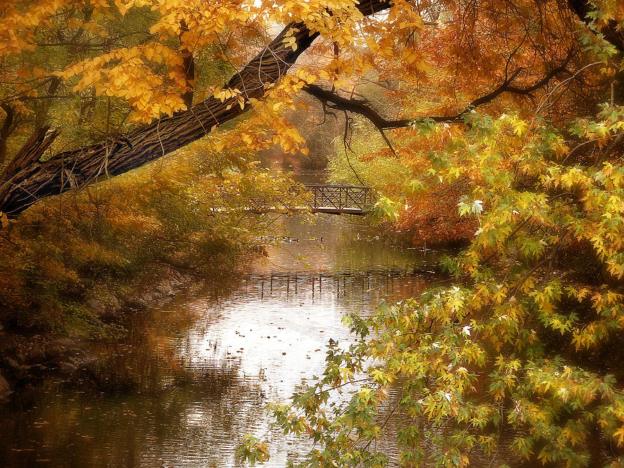 Autumn Photograph - Golden Days by Jessica Jenney