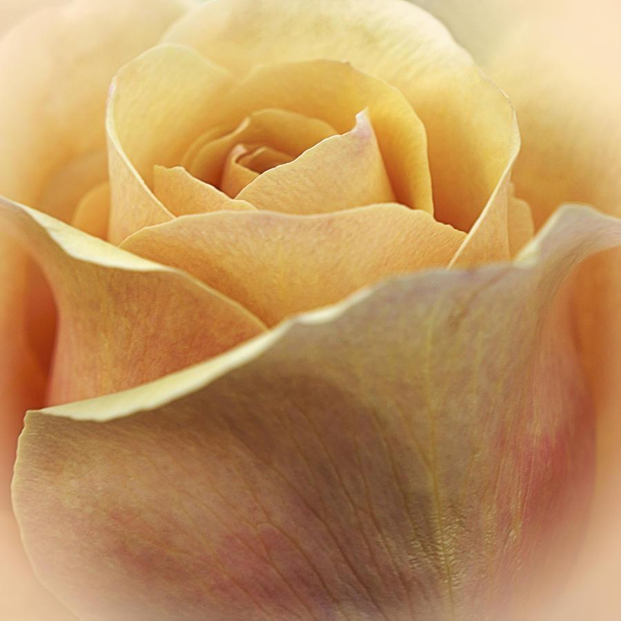 Floral Photograph - Golden Delicious by Darlene Kwiatkowski