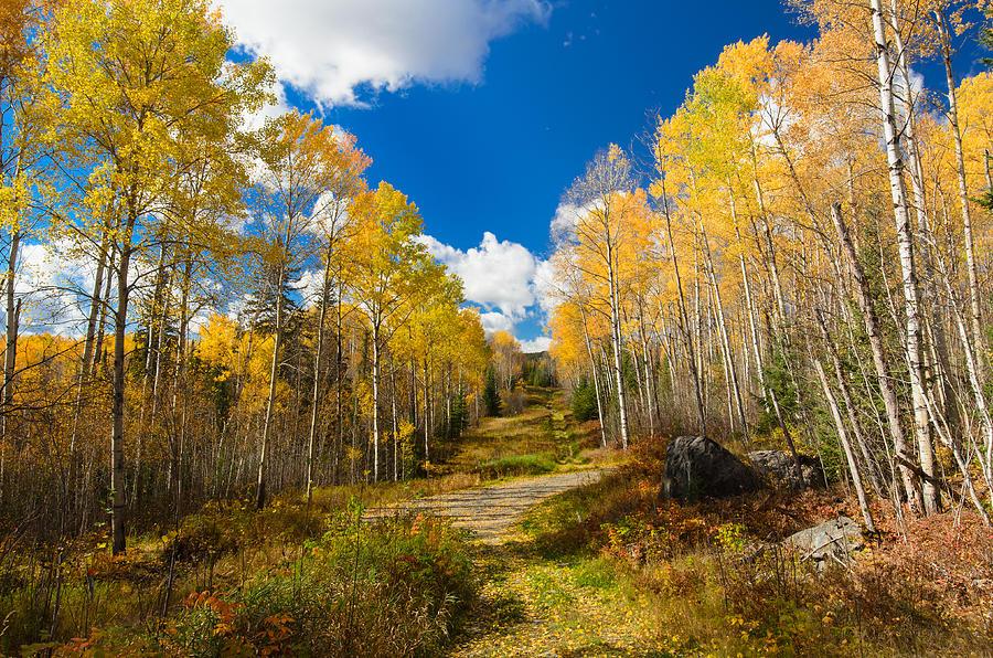 Fall Photograph - Golden Fall by Zhijian Tao