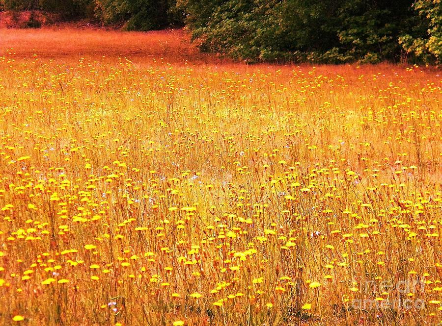 Clouds Digital Art - Golden Pastures by Matthew Seufer
