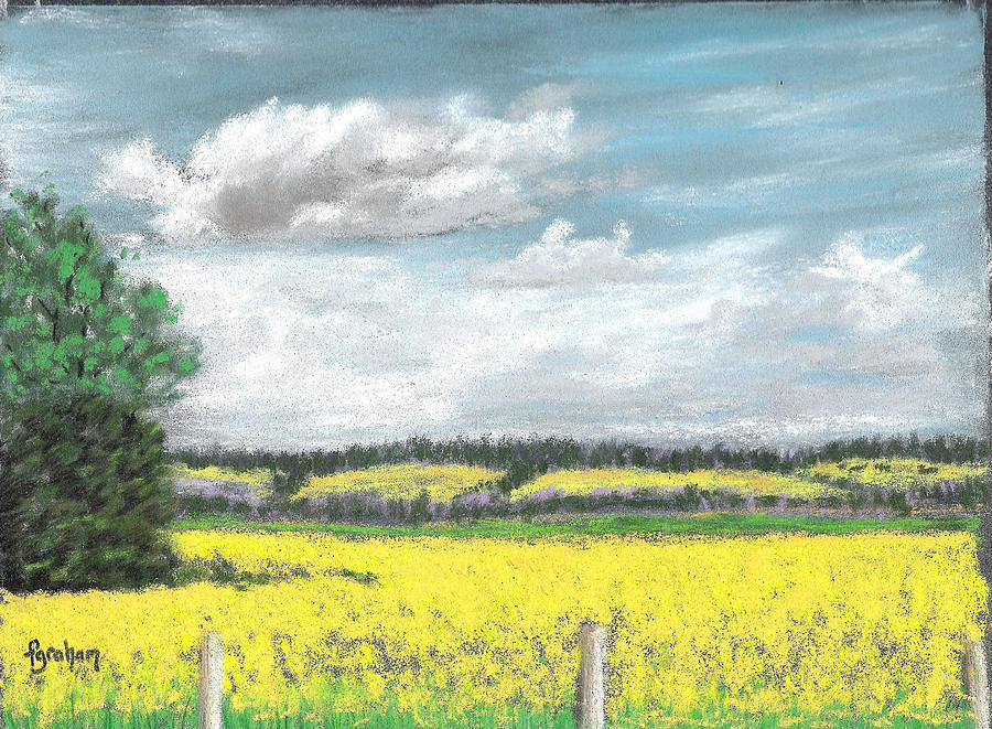 The Golden Canola Fields Are Ready For Harvest In Central Alberta Canada In July Pastel - Golden Fields Of Alberta by Fiona Graham