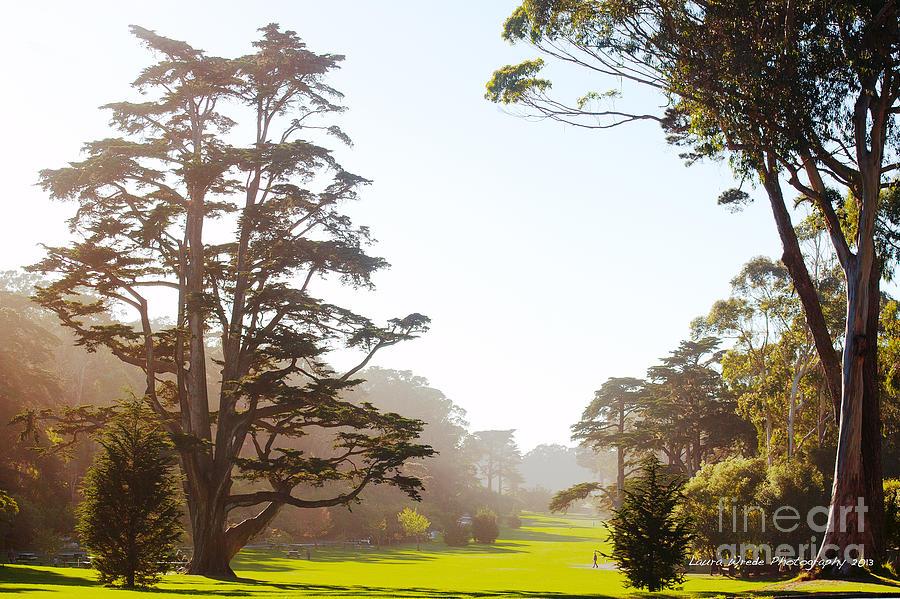 San Francisco Images Photograph - Golden Gate Park San Francisco by Artist and Photographer Laura Wrede