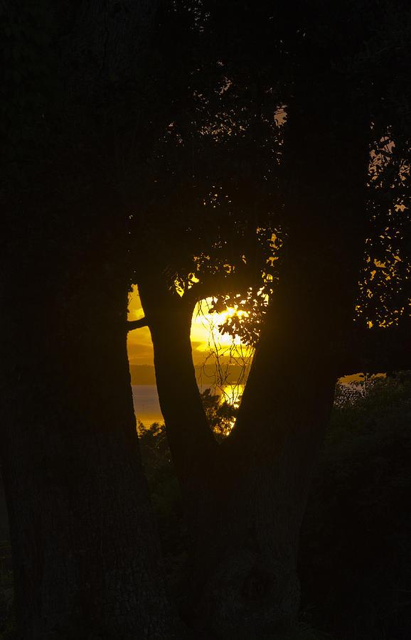 Golden Glimpse by Jennifer Stockman
