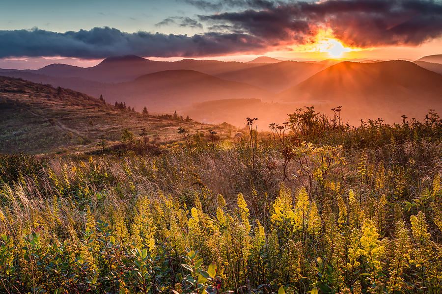 Black Balsam Knob Photograph - Golden Glory by Rob Travis