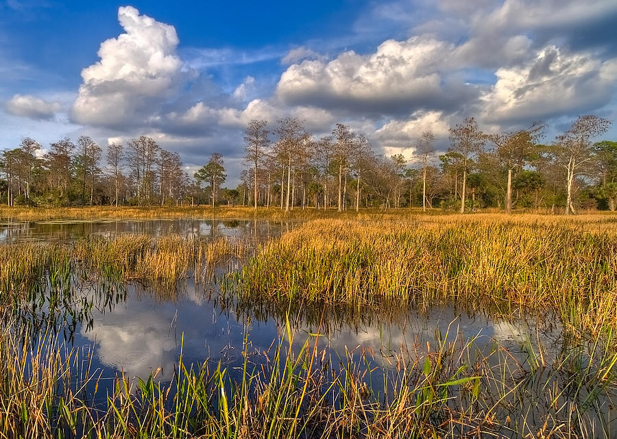 Clouds Photograph - Golden Grasses by Debra and Dave Vanderlaan
