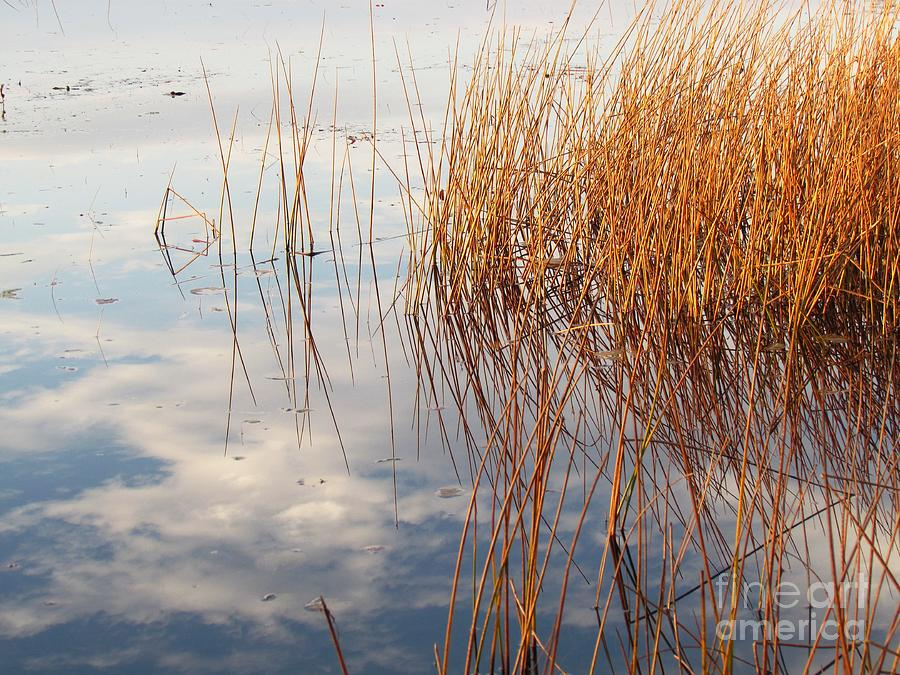 Abstract Photograph - Golden Grasses by Lili Feinstein