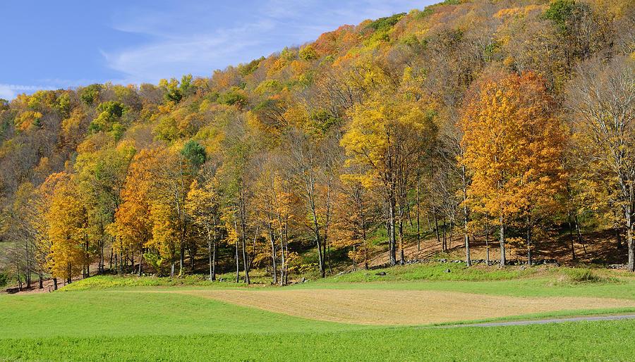 Autumn Photograph - Golden Hills by Luke Moore