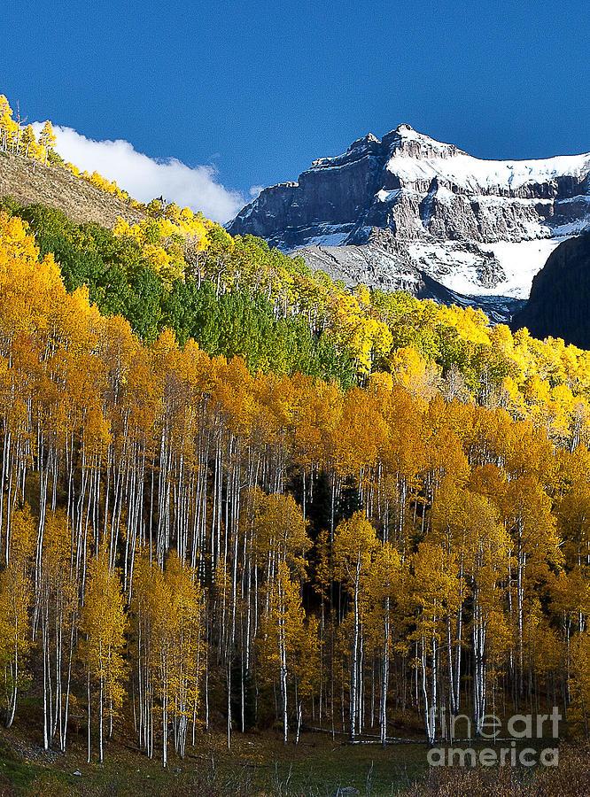 Nature Photograph - Golden Hillside by Steven Reed