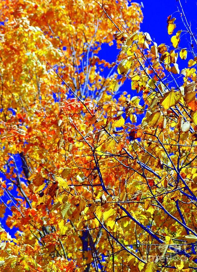 Golden Photograph - Golden by Kathleen Struckle