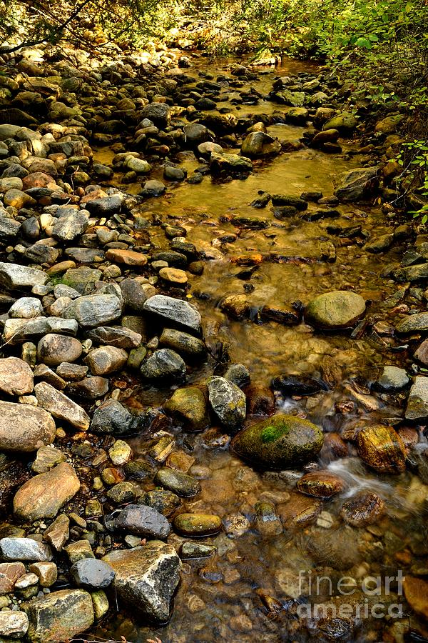 Creek Photograph - Golden Klo Creek by Phil Dionne