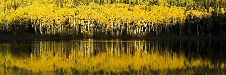 Fall Photograph - Golden Lake by Chad Dutson