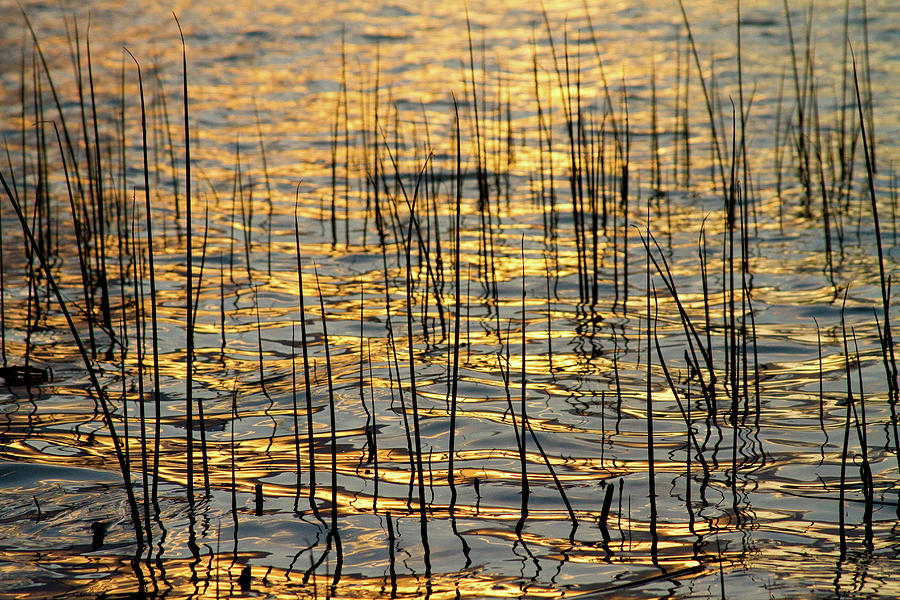 Golden Photograph - Golden Lake Ripples by James BO  Insogna