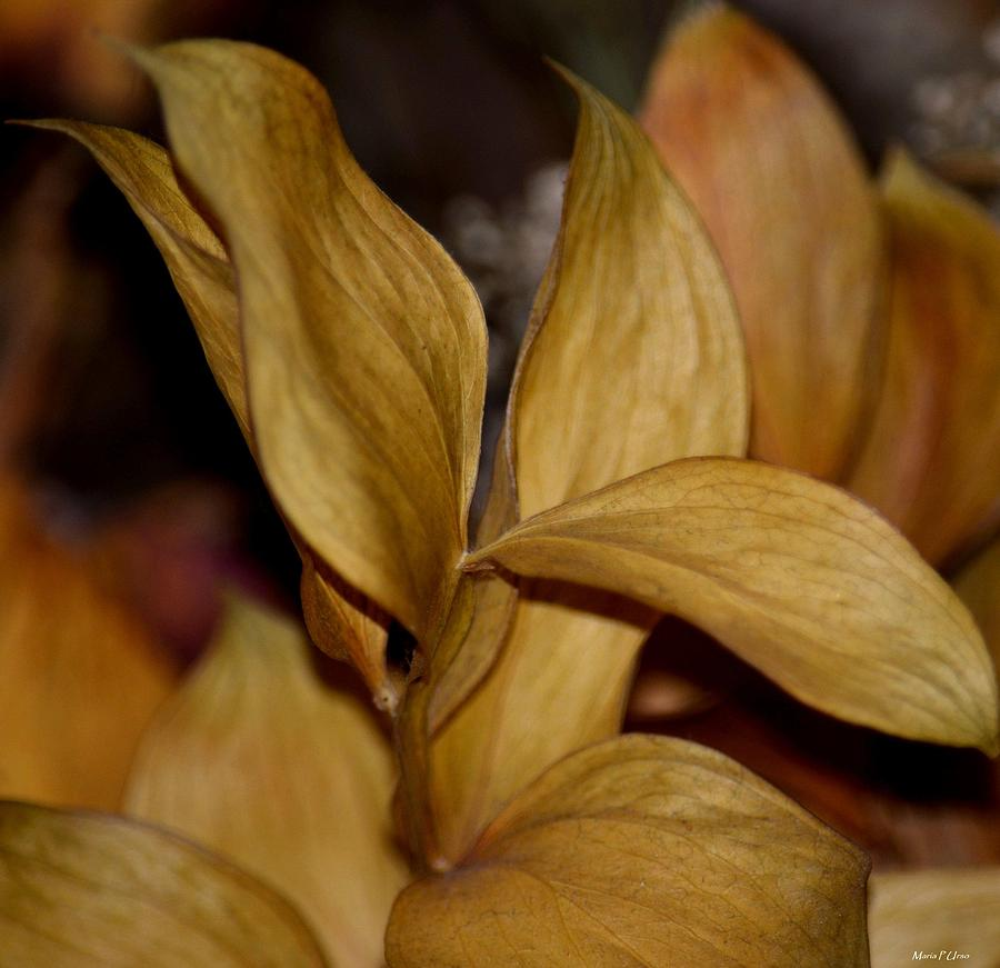 Gold Photograph - Golden Leafed Abstract 2013 by Maria Urso