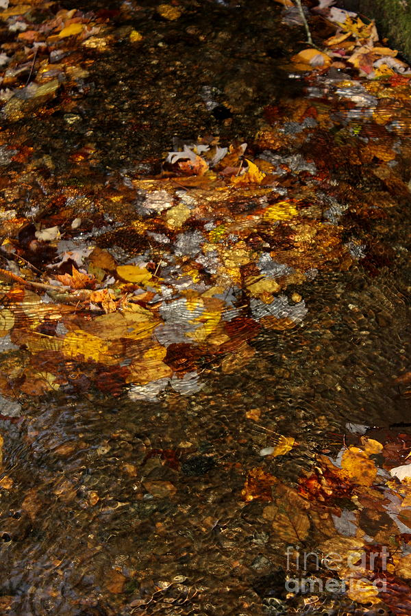 Golden Reflection Great Smoky Mountains by Cynthia Mask