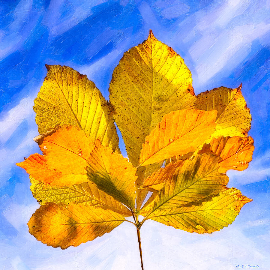 Golden Leaves Photograph - Golden Memories Of Fall by Mark E Tisdale