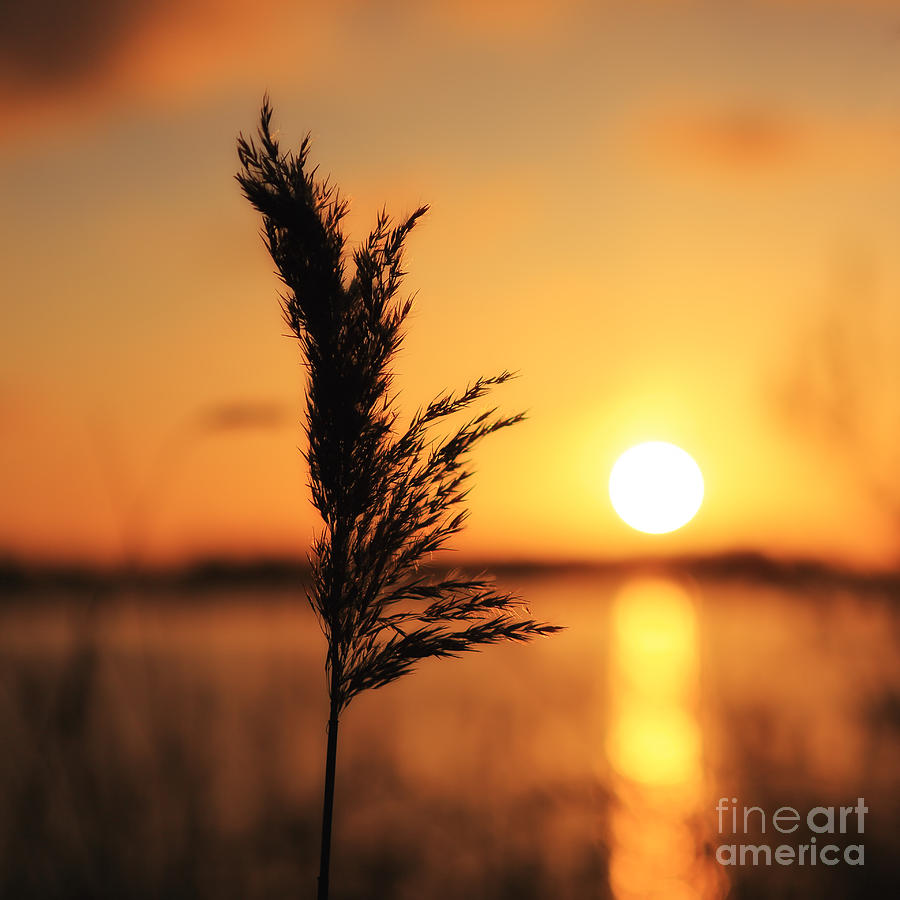 Sun Photograph - Golden Morning by LHJB Photography
