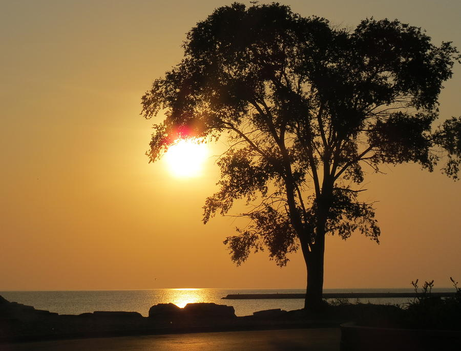 Nature Photograph - Golden Morning by Kay Novy