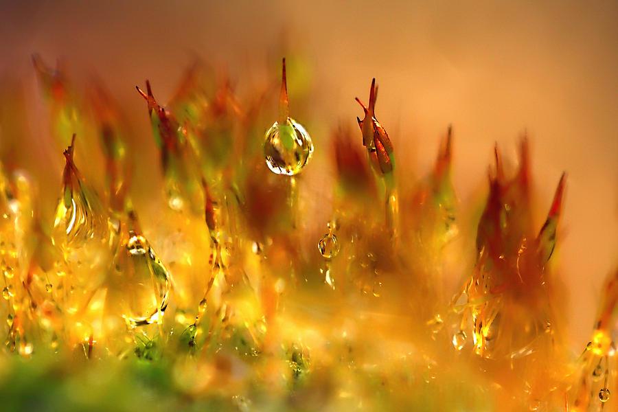Floral Photograph - Golden Palette by Annie Snel