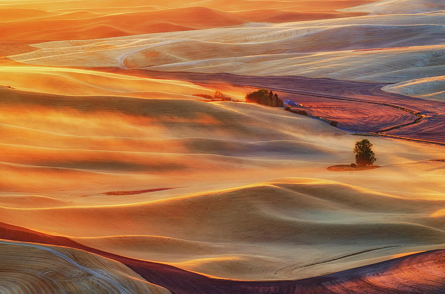Gold Photograph - Golden Palouse by Lydia Jacobs
