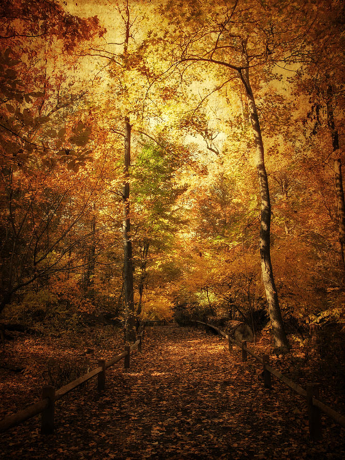 Trees Photograph - Golden Path by Jessica Jenney