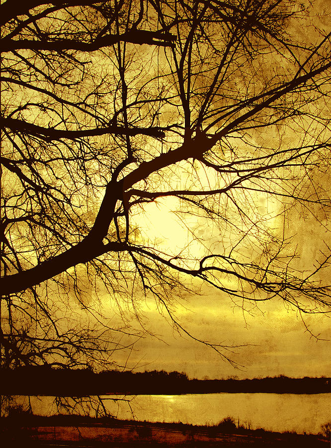 Tree Photograph - Golden Pond by Ann Powell