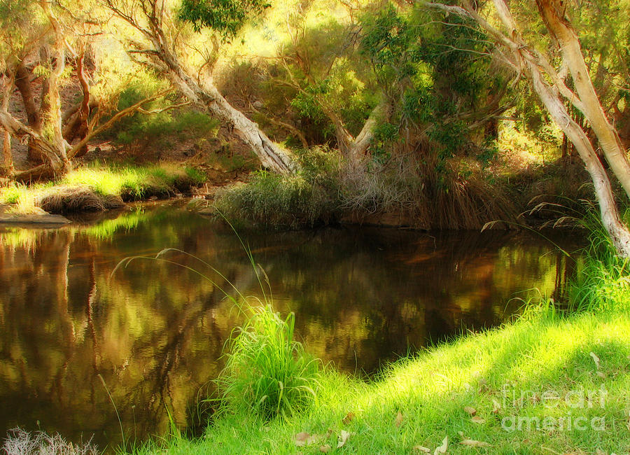 Pond Photograph - Golden Pond by Michelle Wrighton
