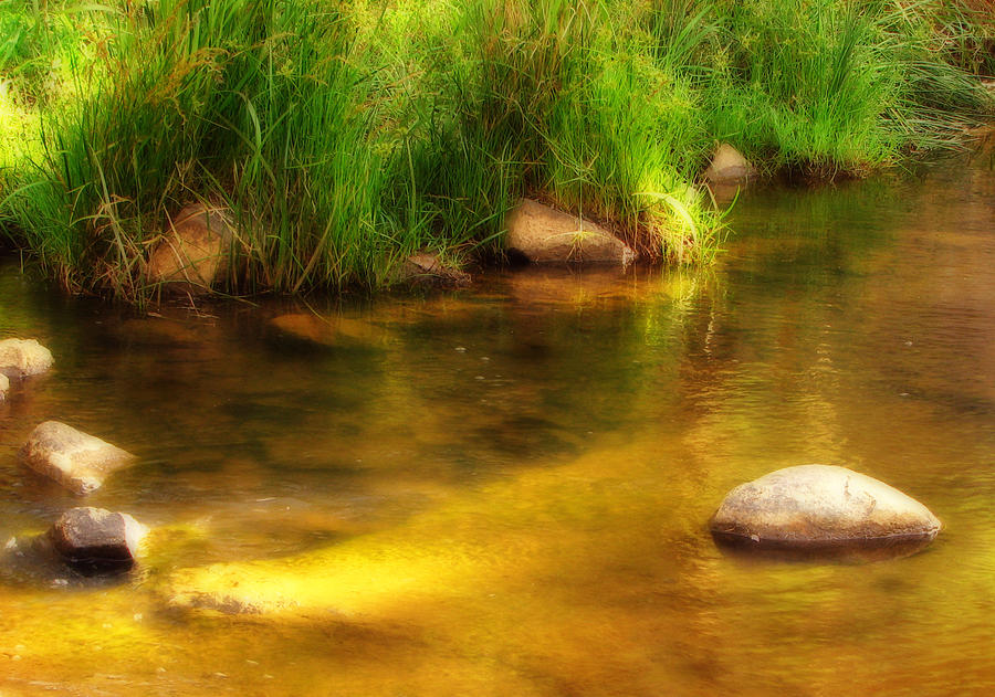 Pond Photograph - Golden Reflections by Michelle Wrighton