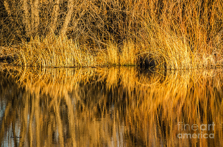 Helena Photograph - Golden Reflections by Sue Smith