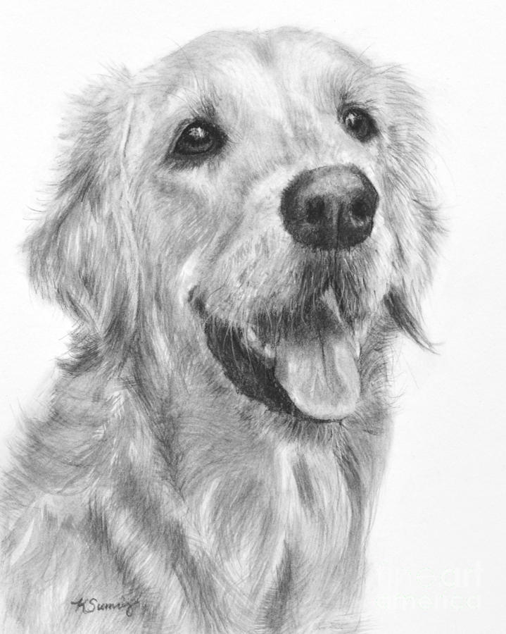 Golden Retriever Duncan by Kate Sumners
