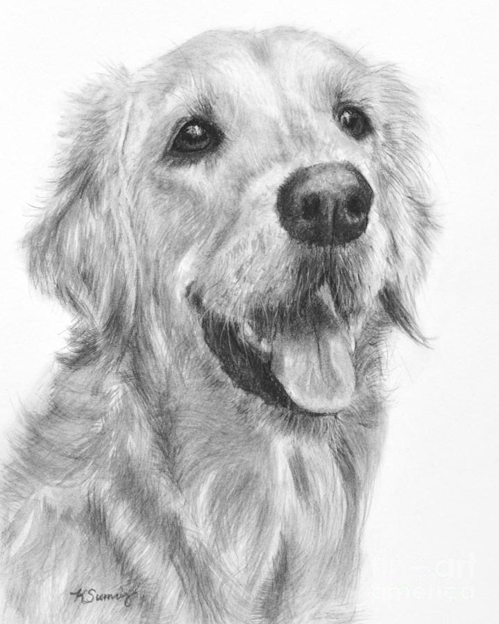Golden Retriever Duncan by Kate Sumners