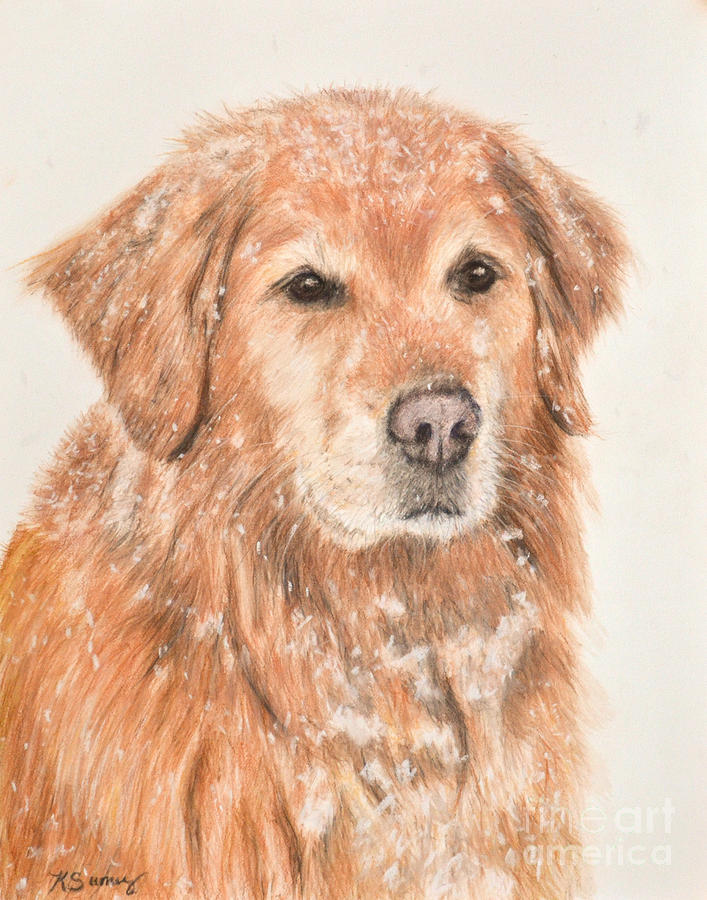 Golden Retriever in Snow by Kate Sumners