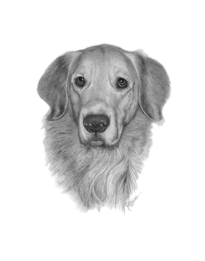 Pet Portrait Drawing - Golden Retriever by Joe Olivares