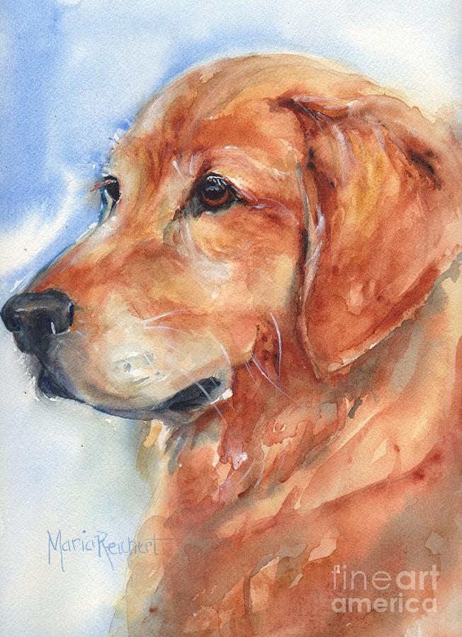 Goldie Painting - Golden Retriever Watercolor by Maria Reichert