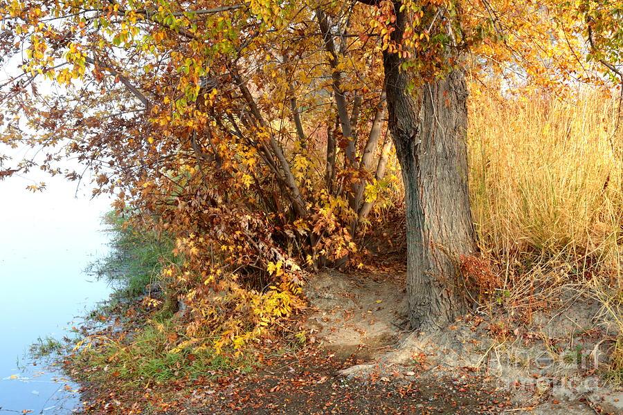 Autumn Photograph - Golden Riverbank by Carol Groenen