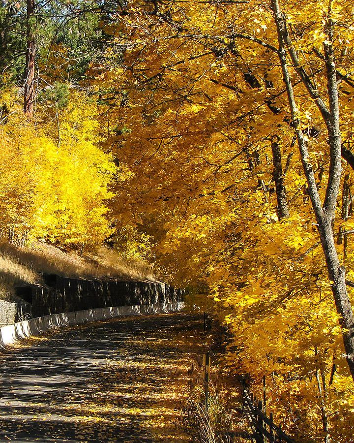 Gold Photograph - Golden Road by Curtis Stein