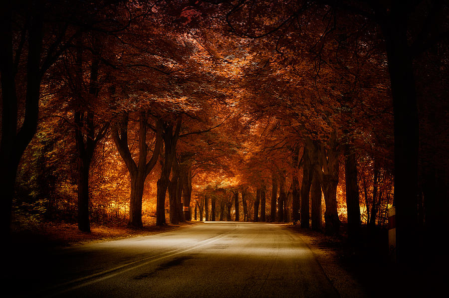 Golden Road Photograph by Marek Czaja